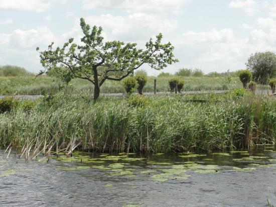 13-Kinderdijk