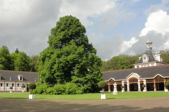 06-Un arbre maginfique!