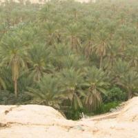Kefta (Tunisie)