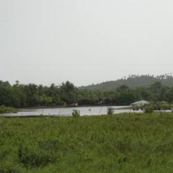 Timeantube (Brésil)